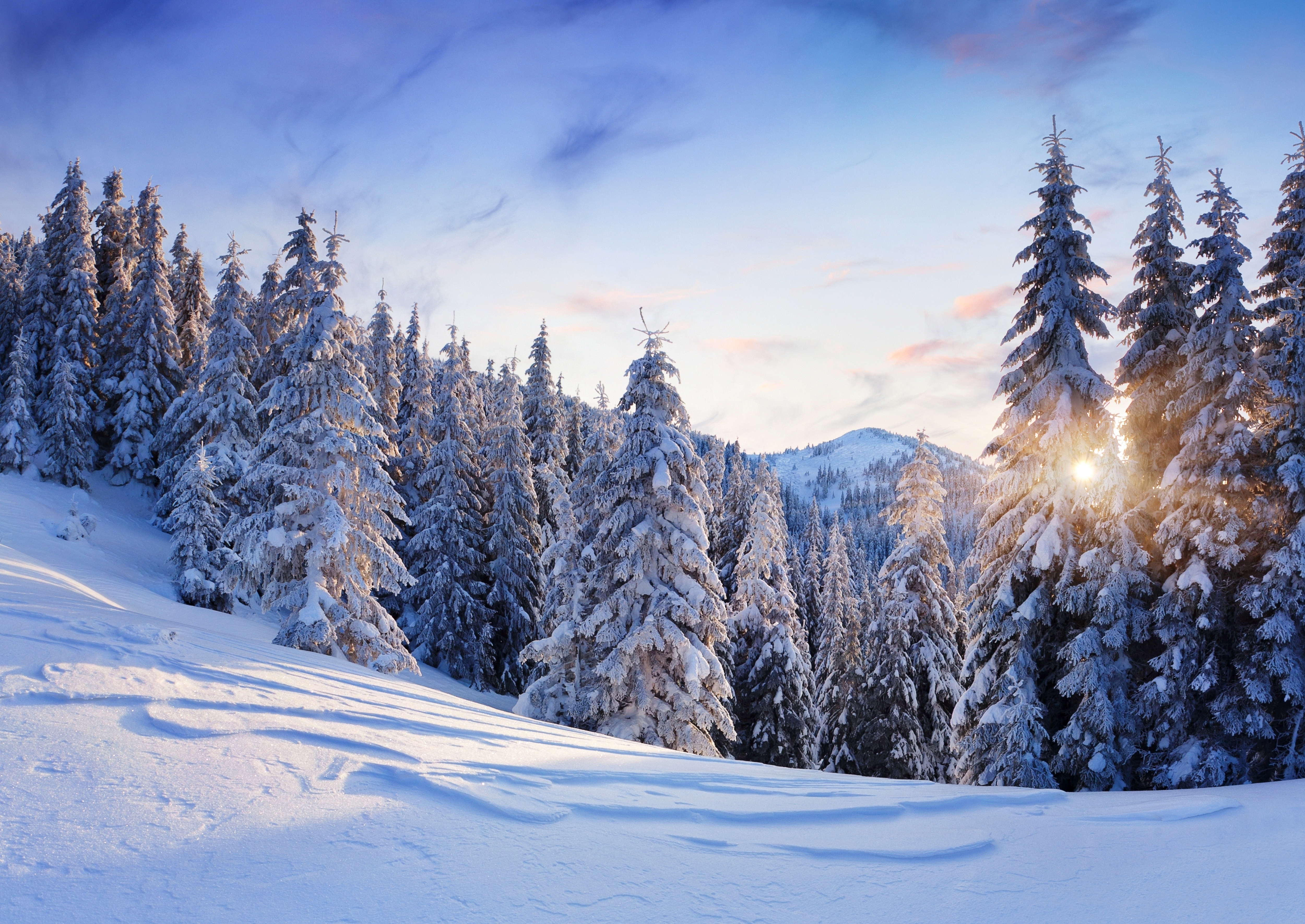 nature-winter-snow-mountains-trees-trees-firs-sky-sun-landscape